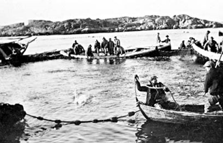 "Loading of herring near Nautøy in the winter of 1928/29. Rowboats and motor boats form a circle to hold the catch. They load the herring into the shore seine vessel. The team of Oluf Trovåg from Solund is harvesting the ""ocean silver"". The crew are from Gulen, Hyllestad, and Solund."