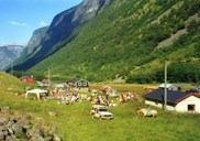 """Summer farm day"" at Langhuso. In recent years a goat cheese festival has been organized at Undredal with entertainment and where traditional fare has been served at Langhuso."